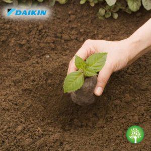 Plantăm aer