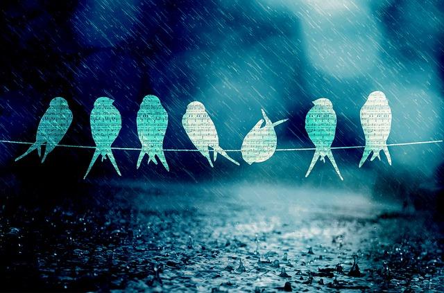 Ploaia îmi dă chef de treabă